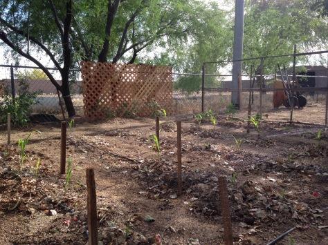 Front half of Garden